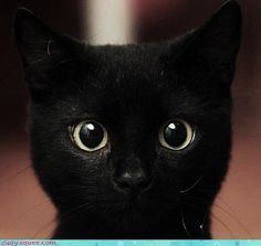 black cats pictures 13