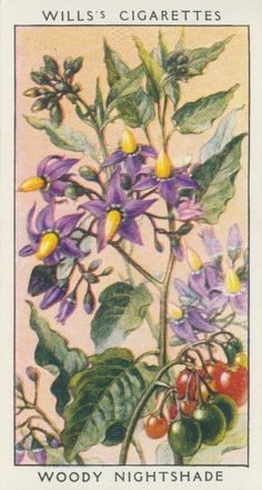 Today I have images from a set of 50 Wildflower cigarette cards from Willis. Flower Fairies, My Flower, Saturday Images, Vintage Seed Packets, Seed Packaging, Old Postcards, Retro Art, Botanical Prints, Vintage Flowers