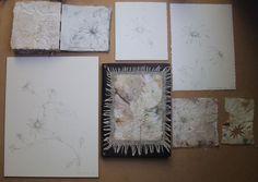 flannel-flower-variations-2014.jpg 1,266×900 pixels