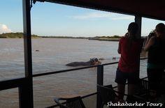 Crocodiles, Kingfisher, Bird Species, Heron, Cruises, Boat, Tours, Water, Outdoor