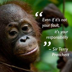 """Orangutans & fantasy readers have lost an icon today. Tea Quotes, Poetry Quotes, Book Quotes, Journal Quotes, Terry Pratchett Death, Terry Pratchett Discworld, Light Quotes, Life Affirming, Wit And Wisdom"