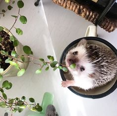 hedgehog . plants . cute . animals . aesthetic