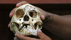 The debate over whether hobbits are a new species continues