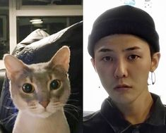 GD; Gdragon; Jiyong; Kwon Jiyong; Bigbang; 권지용 ; 지드래곤 Ji Yong, G Dragon, Gd, Bigbang, Beanie, Kpop, Cats, Animals, Korea