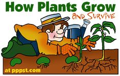How Plants Grow and Survive - Growth Cycles FREE Presentations in PowerPoint format, Free Interactives and Games