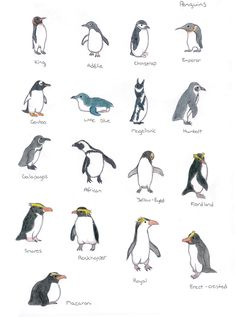 The different types of penguins