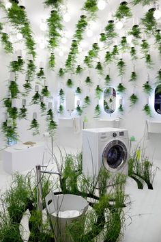 Green Waters Bathroom Decoration Using Plants To Treat Greywater