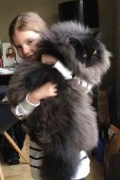 Tiny Runt Blossoms into Magnificently Floofy Cat - Love Meow Huge Cat, Huge Dogs, Pretty Cats, Beautiful Cats, Fat Cats, Cats And Kittens, Crazy Cat Lady, Crazy Cats, Cute Baby Animals