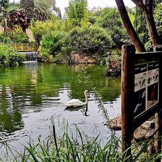 Przygotowując zdjęcia do kolejnego wpisu na bloga przeglądam też zdjęcia z innego miejsca, do którego planuję wyruszyć 💚 I pewnie tam wyruszę!  Być może nawet już za tydzień 💚 Pora spełnić kolejne, podróżnicze marzenie! Kto wie gdzie tym razem mnie poniesie? . Ps. Na zdjęciu PARQUE DE LA PALOMA, o którym już Wam pisałam ostatnio. Przepiękny #park w Benalmádenie, wyróżniony przez @tripadvisor jako jeden z najpiękniejszych parków Hiszpanii 💚 Cudowne miejsce, w którym spędziłam mnóstwo czasu…