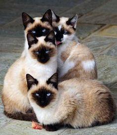 A Gaggle of Cats - or whatever it's called (Witchery would be cool!)