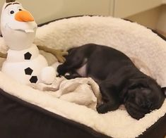 nala the pug - Google Search Animal Pictures, Cute Pictures, Baby Pugs, Black Pug, Pug Puppies, Cute Pugs, Cutest Thing Ever, Pug Love, Make You Smile