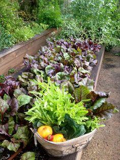 edible garden ..