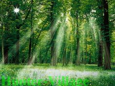 green in nature - Yahoo Image Search Results