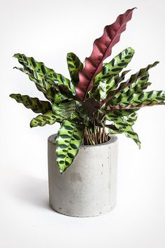 Patterned Plants - Pinterest Predicts The Top Home Trends Of 2018 - Photos