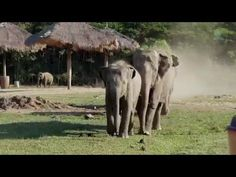 What This Baby Elephant Does Every Morning When He Sees The Tractor Driver Will Touch You! - Native Warriors