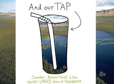Boreal Forest is our tap, illustration by Franke James, features forest water photo by D. Langhorst, Ducks Unlimited, from A Forest of Blue,...