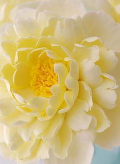 ~✿ڿڰۣ Soft Yellow Dahlia