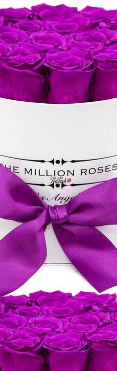 ❈Téa Tosh❈  THE.MILLION.ROSES #TheMillionRoses #teatosh Magenta, Purple, Pink, Box Roses, The Millions, Prayers, Tea, Floral, Reign