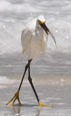 Walk This Way.    On the beach of Anna Maria Island, Florida