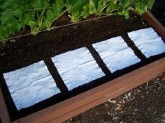 Making easy seed mats - works well for square foot gardening using small seeds - lettuce, carrots, radishes, etc.
