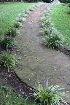 Sidewalk lined with monkey grass
