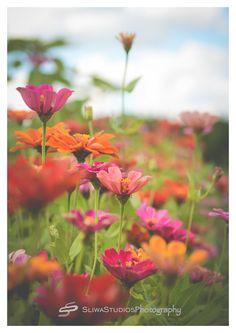 Flowers | Orlando Photographer| Landscape Photography| Sliwa Studios Photography