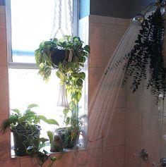 shower plants. #plants #indoorjungle #houseplants