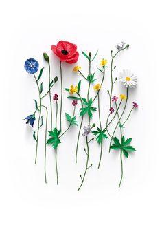cm 170 gr paper Signed by Fideli Photo Magnus Cramer Love Flowers, My Flower, Flower Art, Paper Flowers, Beautiful Flowers, Spring Flowers, Flower Backgrounds, Flower Wallpaper, Iphone Wallpaper