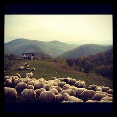 #travel #romania #peace Future Travel, Romania, Vineyard, To Go, Castle, Peace, House, Outdoor, Instagram