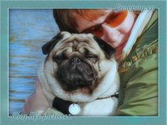 My mom love me (pug) - http://europug.eu/my-mom-love-me/