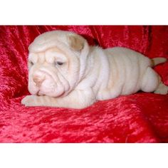Image result for NEEDLE FELTED shar pei