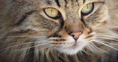 Gatos são nossos protetores