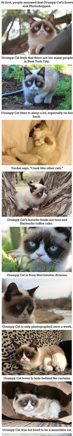 30 Things You Probably Didn't Know About Grumpy Cat. So cute! I love her all curled up asleep!