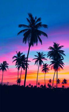 einmalige - bilder von palmen - bunter hintergrund (Cool Tumblr Backgrounds)