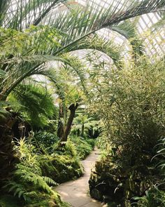 Do you like this fernery of dreams at Tatton Park from last week? Things are in the works to get you closer to the action... #HaarkonGreenhouseTour