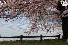 Kaizu-Osaki | Nagahama / Northern Shiga | Japan Travel Guide - Japan Hoppers