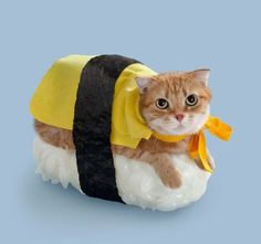 'Neko-Sushi' is a collection of pictures of cats on sushi. An inexplicably amazing brainchild of Japan-based company Tange & Nakimushi Peanuts, this series of postcards features bizarre images of cute kittens sitting on top of sushi rice rolls. Cute Cats, Funny Cats, Funny Animals, Cute Animals, Funniest Animals, Animal Memes, Costume Chat, Pet Costumes, Sushi Costume