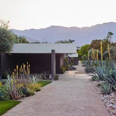 "1,365 Likes, 8 Comments - Modernism Week (@modernism_week) on Instagram: ""Loving the view from these 1964 guest cottages at Sunnylands, complemented by a sustainable desert…"""