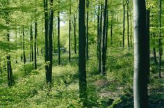 """Am Donnerstag, 25. April 2013, wird der """"Tag des Baumes"""" begangen. Unter anderem gibt es dann Baumpflanzungen, Feierstunden und weitere Aktionen rund um die edlen Pflanzen, welche die Bedeutung des Waldes für Mensch und Wirtschaft im Bewusstsein halten sollen."""