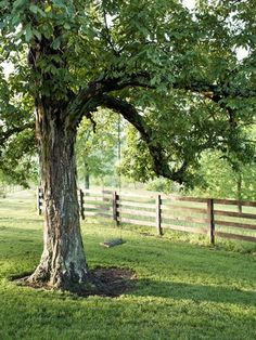 My Home has Big beautiful trees and green pastures to Lay Down in ❤️✨