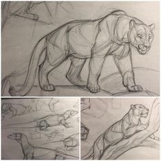 New Art Sketches Animal Sketches, Art Drawings Sketches, Animal Drawings, Cool Drawings, Drawing Animals, Lion Sketch, Cat Anatomy, Sketch Inspiration, Art Reference Poses