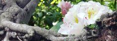 Therapie ist die Vorstufe zu Meditation, Therapie bereitet auf Meditation vor. Durch Meditation kann man dann die Lebensquelle finden. Ein Osho Zitat.