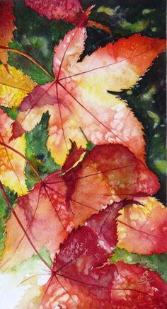 Japanese Maple by Sidra Kaluszka, Watercolor