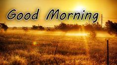 Good Morning Dear Hd Wallpapers ~ Good Morning Hd Wallpaper #82056