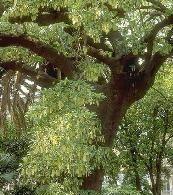 Orto Botanico dell'UNIVERSITA' - Catania