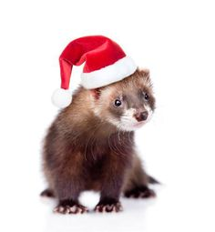Influenza Transmission in Ferrets