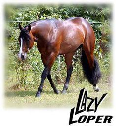 Lazy Loper AQHA Stallion