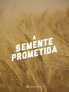 A semente prometida #21 #OsArrais