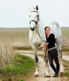 percheron horses - Google Search