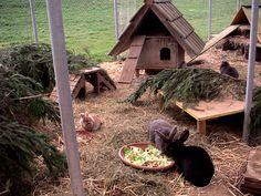 Innholdsrik kaningård med mye som kaninene kan aktivisere seg med.